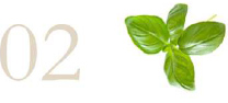 02 e foglie basilico